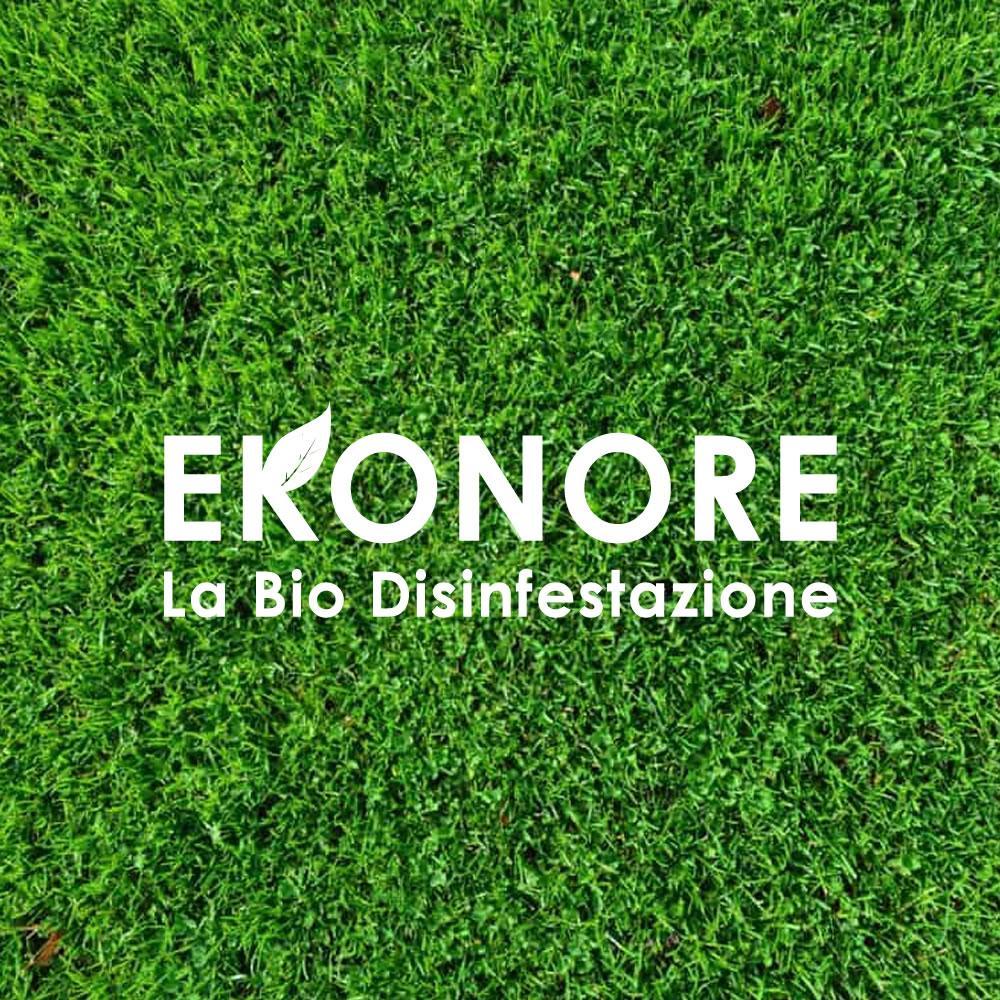 Disinfestazione insetti rimedi ecologici e definitivi for Formiche volanti in casa