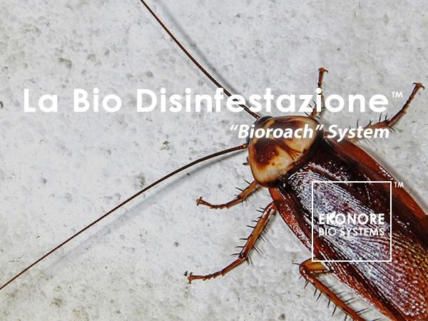 Tipi di blatte e scarafaggi come riconoscerli ekonore for Tipi di case in italia