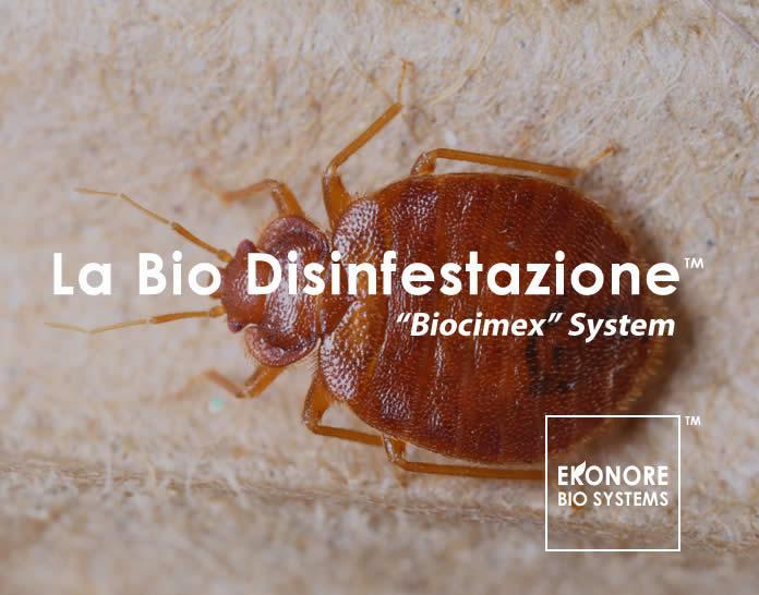 Disinfestazione Cimici Dei Letti Parma 100 Bio Logica Ekonore